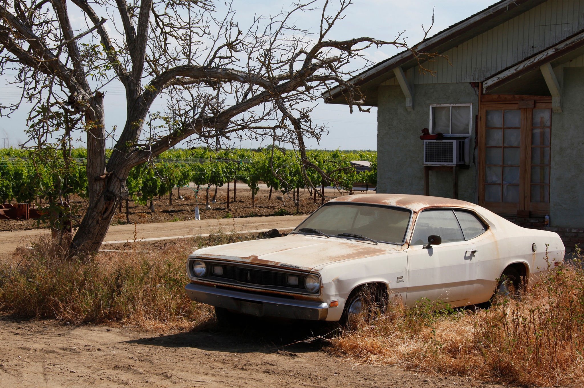 Here's where the car sat untouched for roughly five years on Steve Dulcich's grape farm.