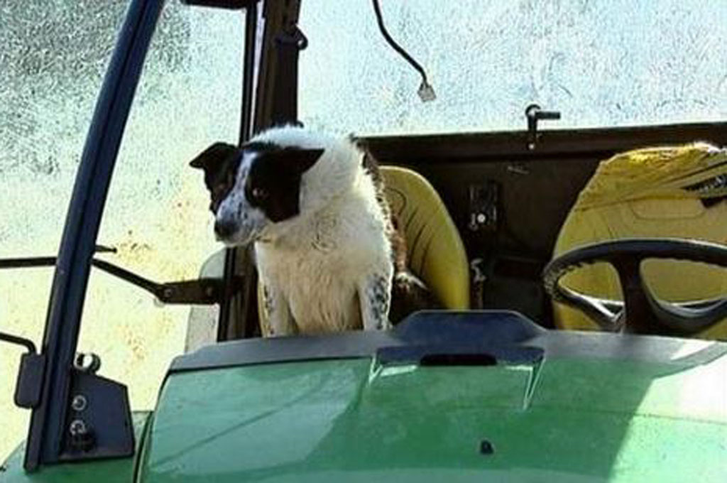 Dog Takes Tractor for a Spin on Scotland Highway